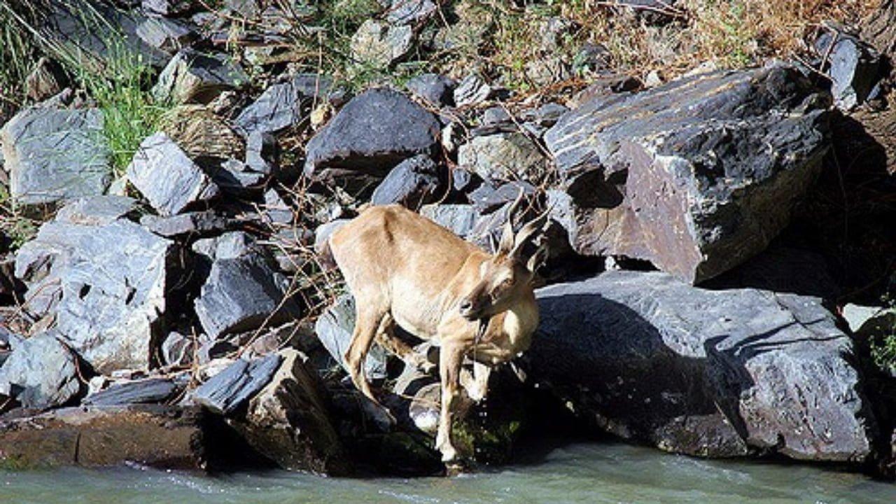 Tooshi Game Reserve