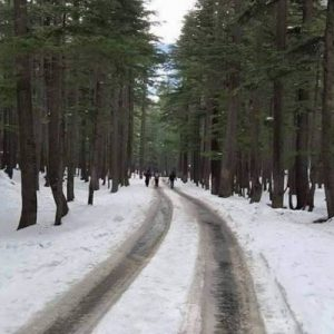Ushu-Forest-Kalam-Swat-Valley-KPK-800×600
