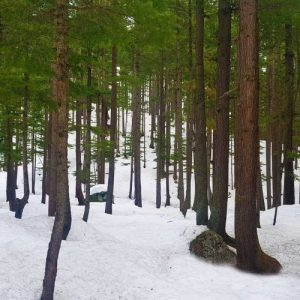 kalam-forest