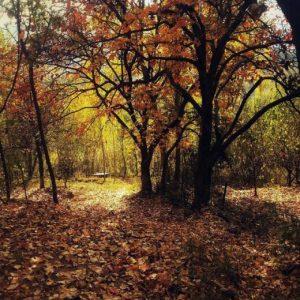 swat-autumn7