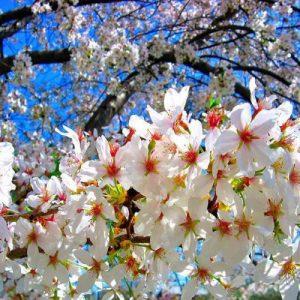 swat-blossom